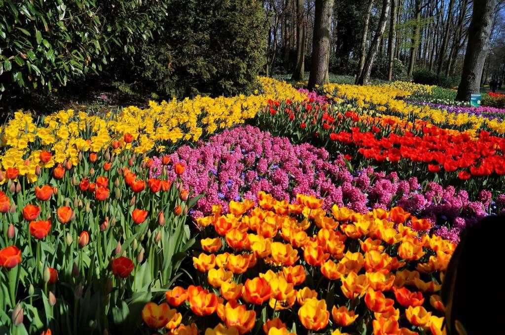 Wiosenna łąka kwietna z kwiatów cebulowych.