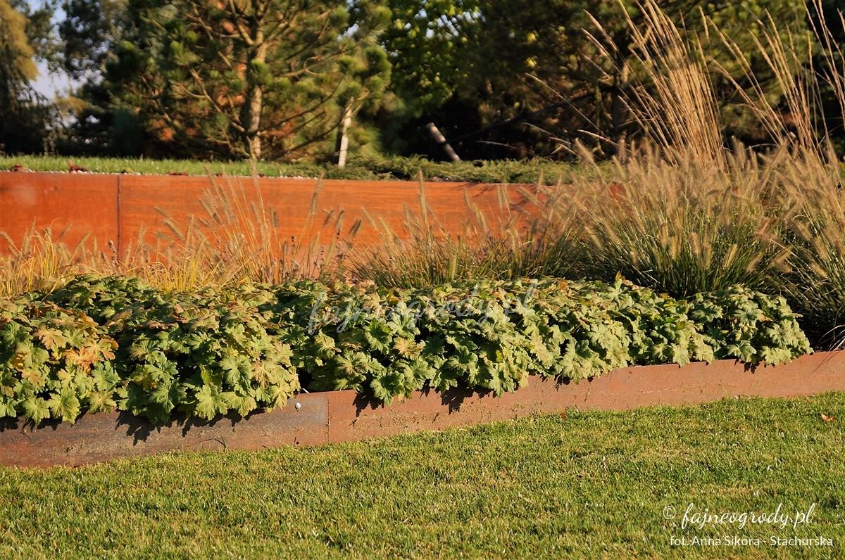 ogród traw projekt
