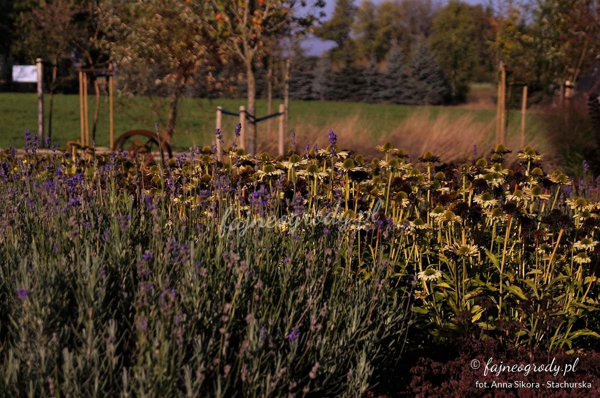 ogród bylinowy projekt