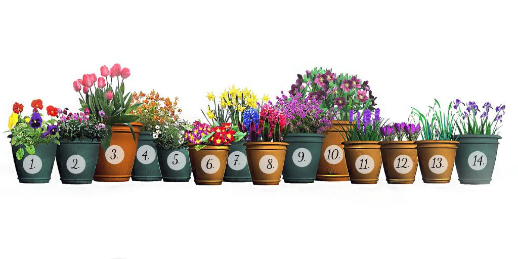 wiosenne kwiaty nabalkon