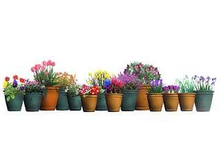 Rośliny Na Cienisty Balkon Moich 15 Typów Fajneogrodypl