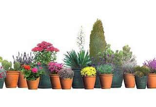 14 propozycji na kwitnący balkon od lutego do maja