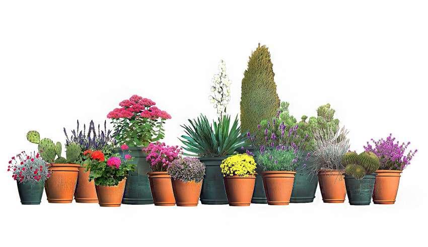 Rośliny Na Słoneczny Południowy Balkon Moich 15 Typów