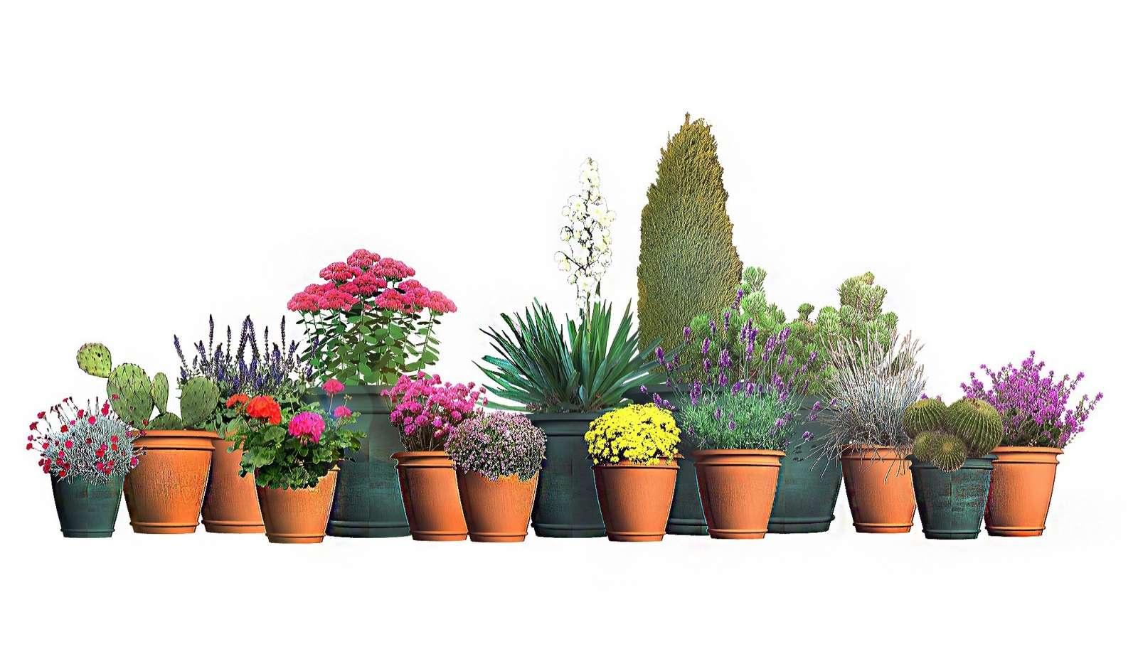 Rosliny Na Sloneczny Poludniowy Balkon Moich 15 Typow Fajneogrody Pl