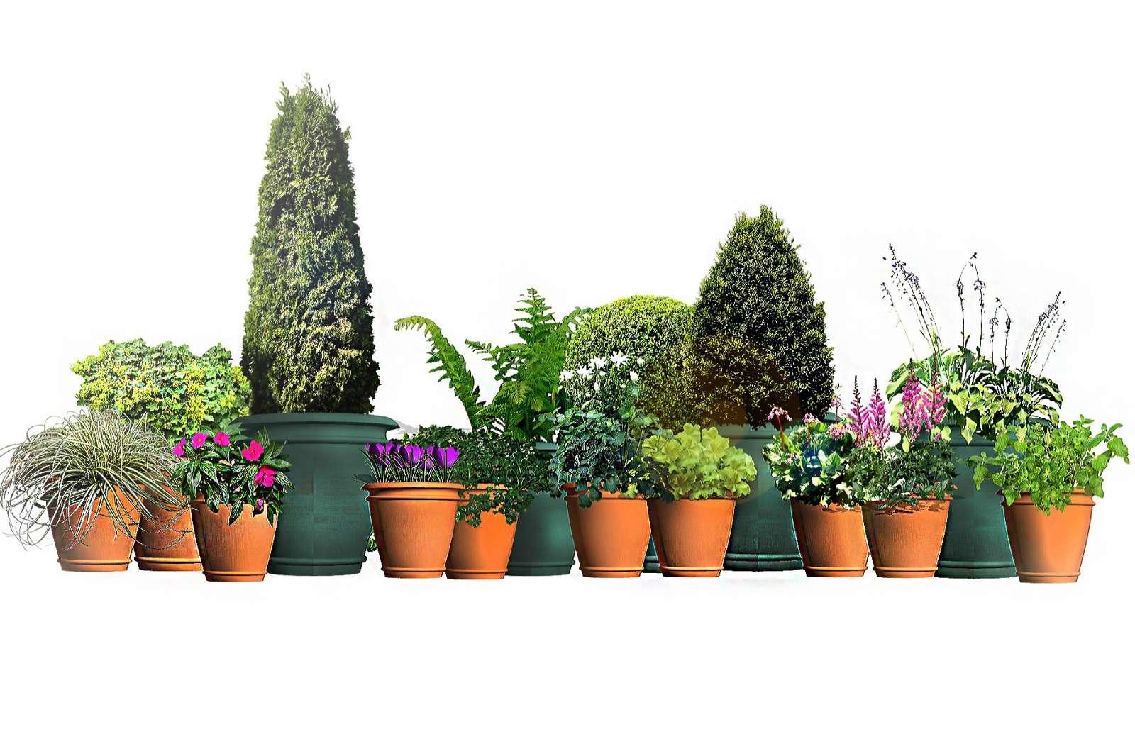 Rosliny Na Cienisty Balkon Moich 15 Typow Fajneogrody Pl