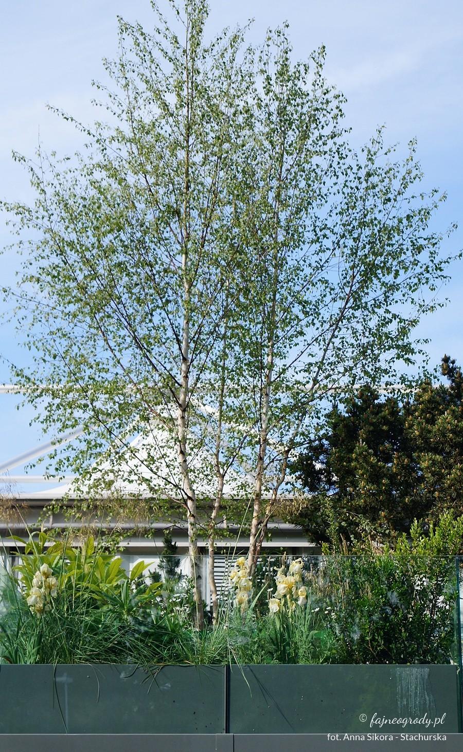 drzewa wogrodzie