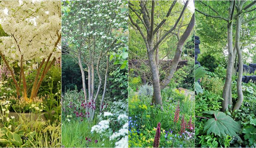 Drzewa Do Ogrodu Radykalna Zmiana Trendów Fajneogrodypl