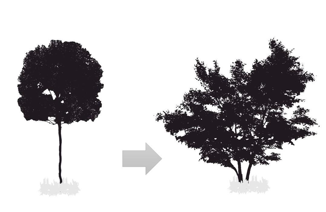 drzewa doogrodu