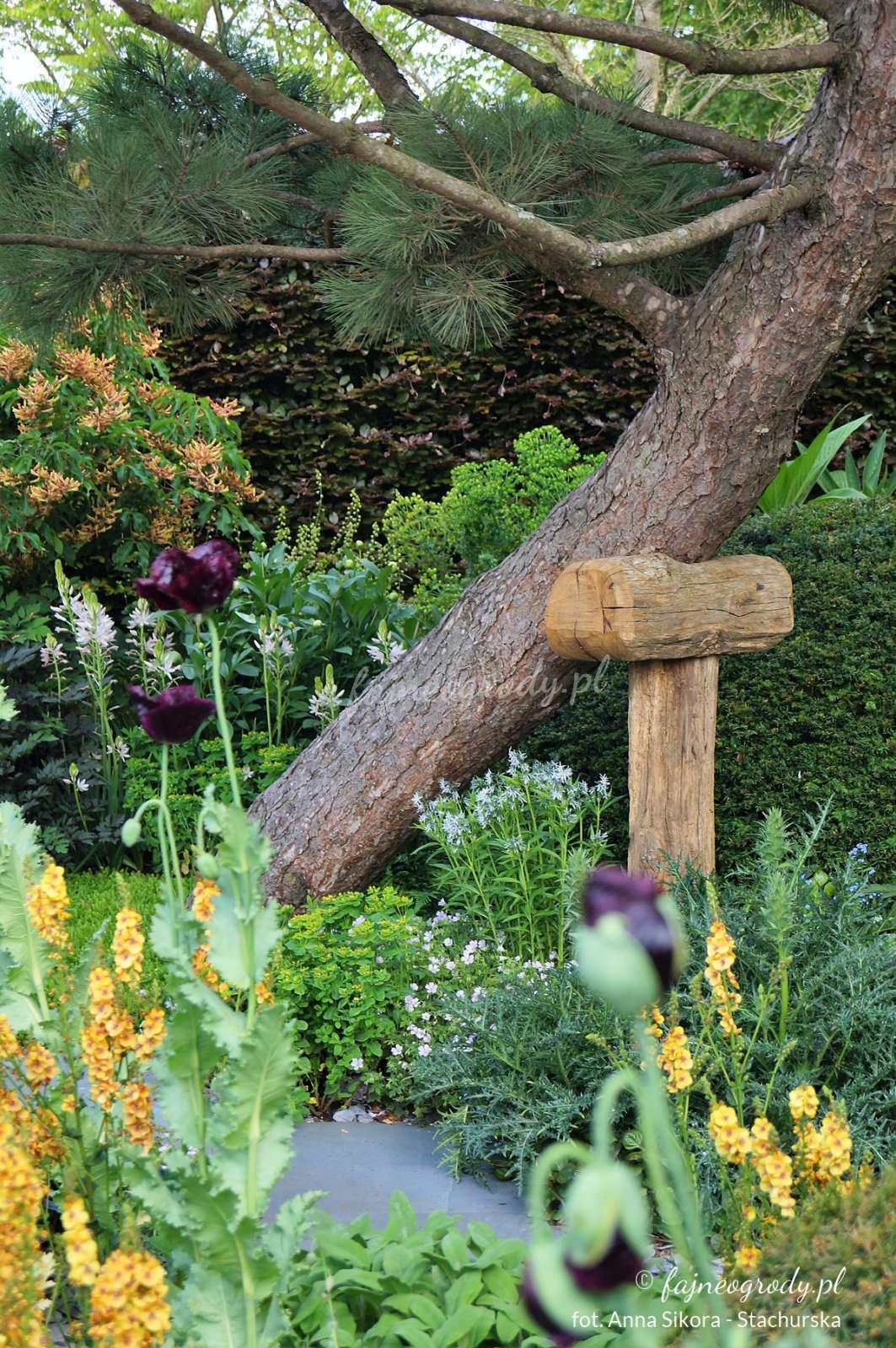 ogród pokazowy zpodpartą sosną